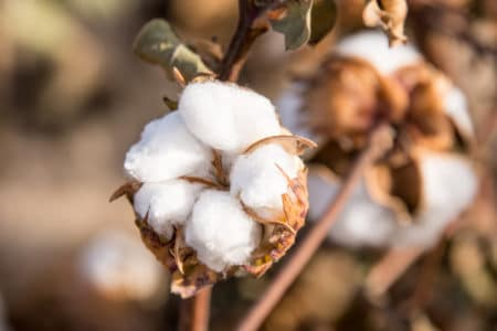 Texas Cotton Gin Injury Lawyer